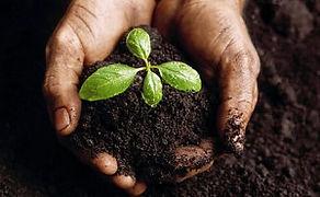Soil Hands.jpg