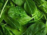 spinach.jfif