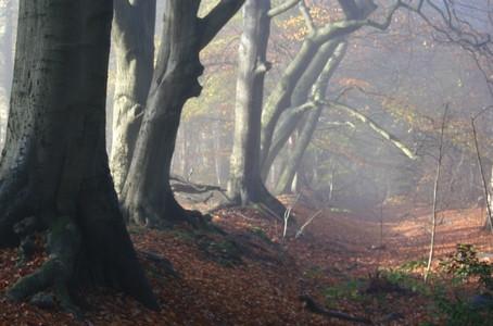 Erfgoedwaarden in bos