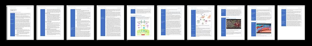 MSC2020-ResearchMediaAudit-01.png