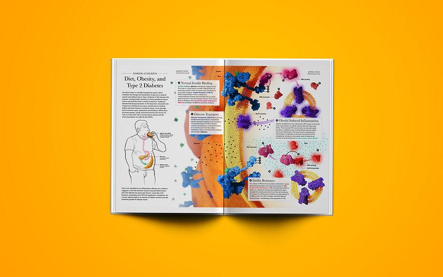3D Modelling, C4D, adobe illustrator, illustration, diabetes, obesity, insulin, magazine spread