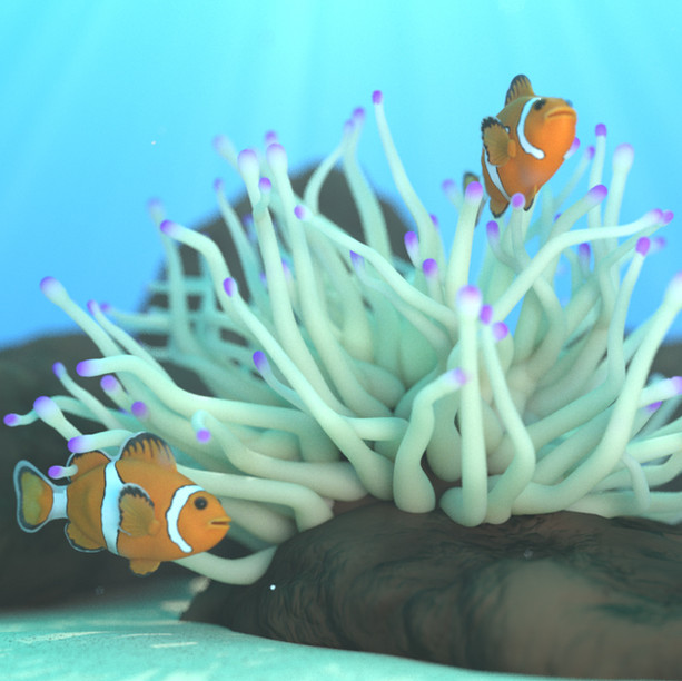Finding Amphiprioninae
