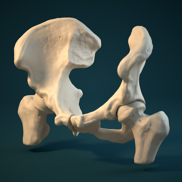 3D Modelled Pelvis
