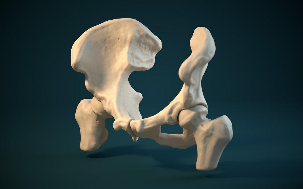 3D Modelling, C4D, ZBrush, bones, pelvis