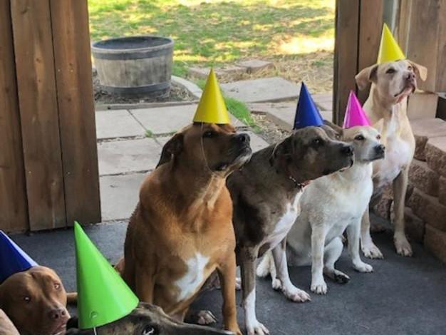 Birthday dogs.jpg