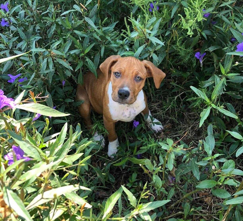 Puppy Consultation