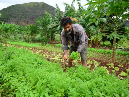 Simpósio internacional discute agricultura familiar em João Pessoa