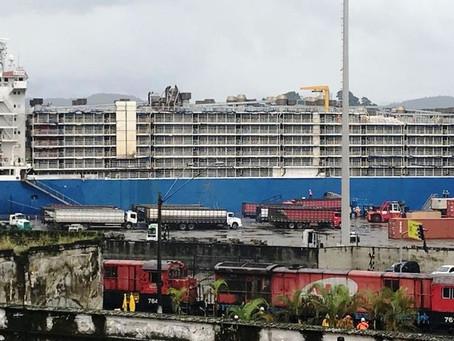 Liminar autoriza partida de navio com gado em Porto de Santos