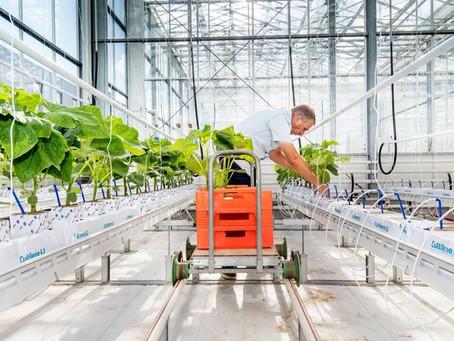 Universidade holandesa cria desafio com estufas autônomas