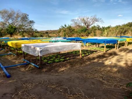 Pesquisas desenvolvidas na UEPB potencializam cultivo de hortícolas