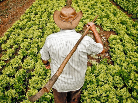 Renegociação de Dívidas Rurais dá desconto de até 95% a agricultores paraibanos
