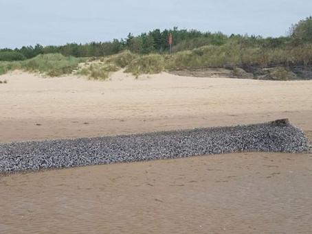 É um monstro? Criatura misteriosa surge em praia na Europa e intriga moradores