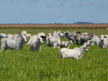 Presidente da CNA apresenta sistema que moderniza pecuária e fala da agricultura sustentável brasile