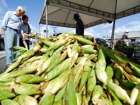 Preço do milho tem variação de 66%, com preços entre R$ 30,00 a R$ 50,00