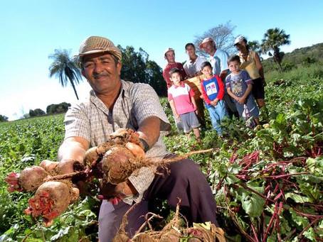 Governo divulga cotação de preços da agricultura familiar