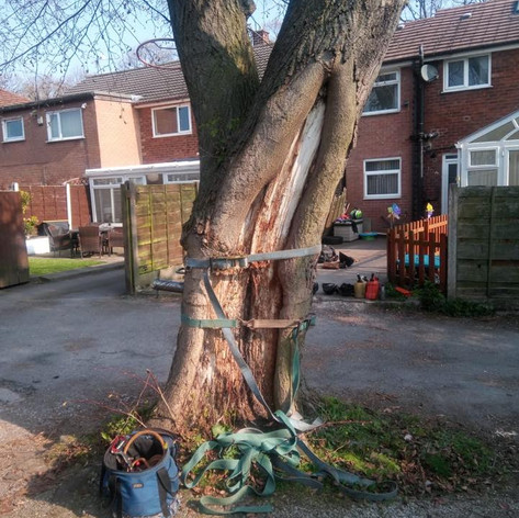 Tree Removal Cheshire