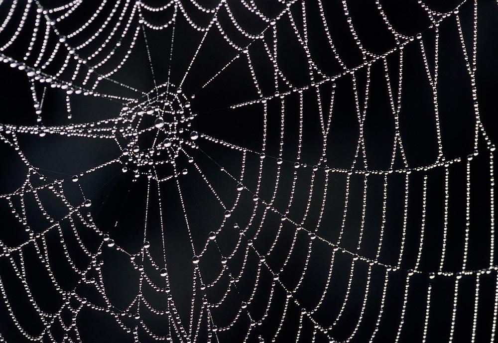 photo of spider web. photo credit to MIT