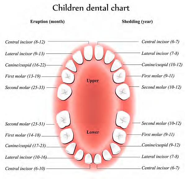 children dental chart.png