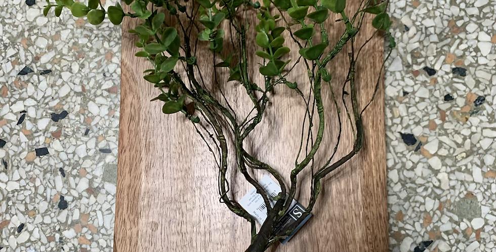 Leaves bush