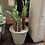 Thumbnail: Small potted succulent (4 styles)