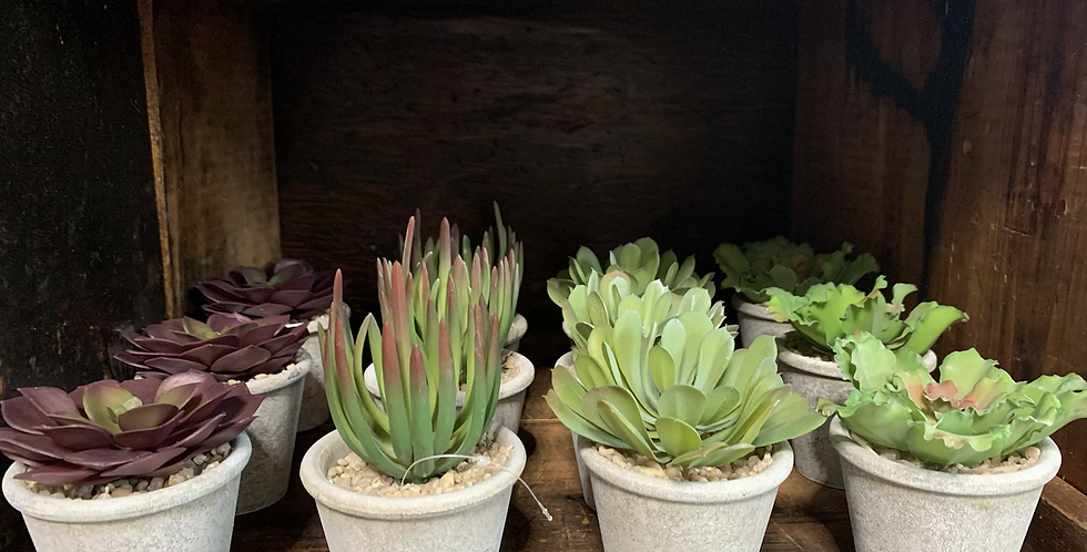 Mini potted succulent (4 styles)
