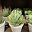 Thumbnail: Mini potted succulent (4 styles)