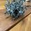 Thumbnail: Eucalyptus orb