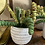 Thumbnail: Potted succulent (3 styles)