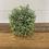 Thumbnail: Grass Orb