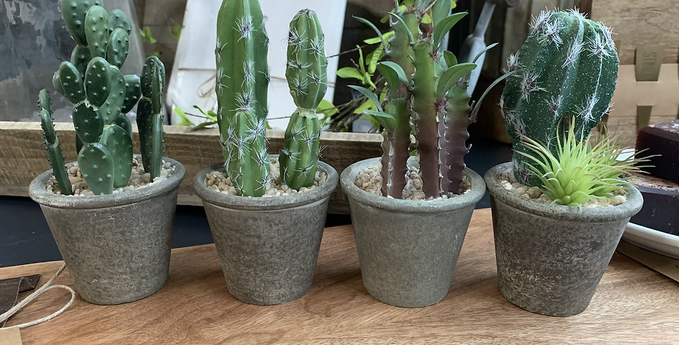 Small potted succulent (4 styles)