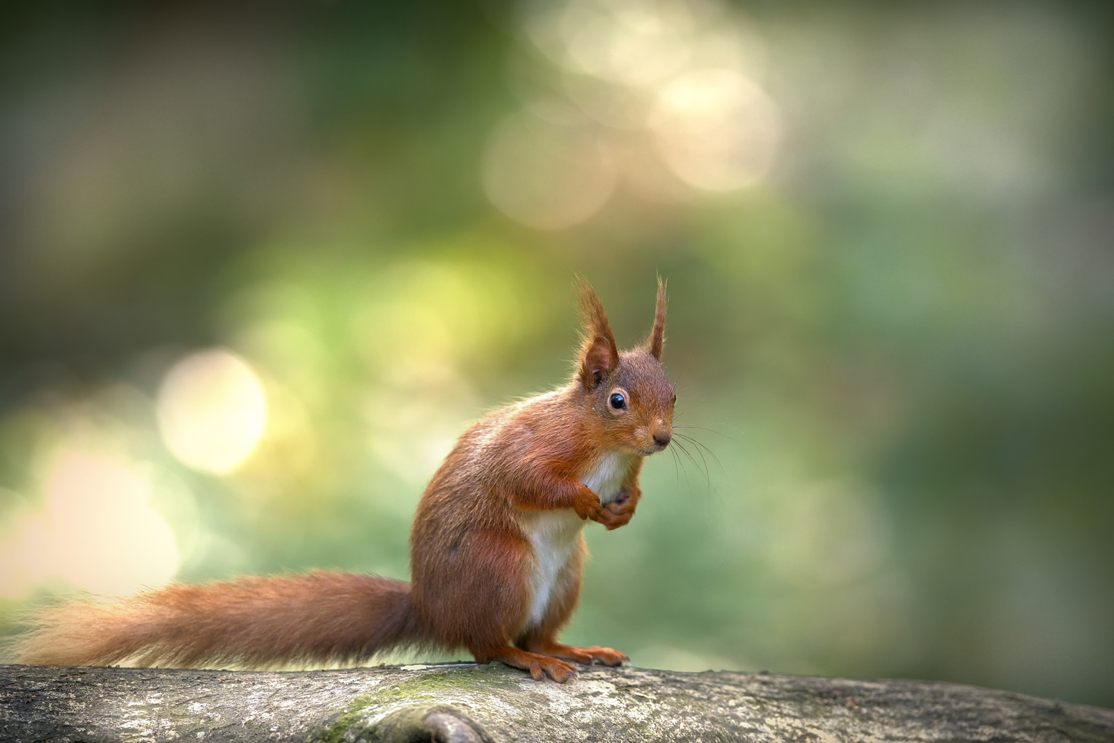 PDI - Squirrel on a log by Alan Hillen (12 marks)