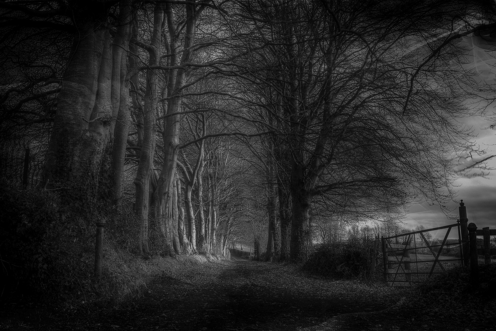 MONO - Whispers In the Shadows by Alan Hillen (11 marks)