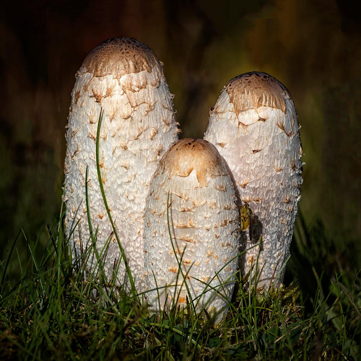'Fungi and fly' by Marlene Hazlehurst ( 10 marks )