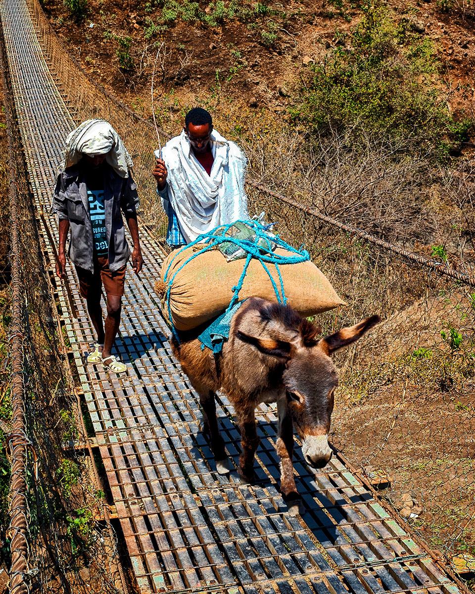 PDI - Load up the donkey by Patricia Mackay ( 10 marks)