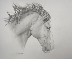 paard 2009