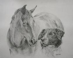 paard en hond 2009