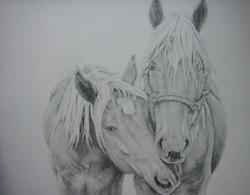 paarden  2009