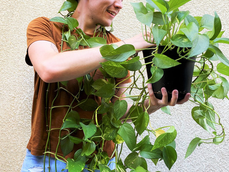 Propagating My Pothos: How Easy it is to Grow More Plants