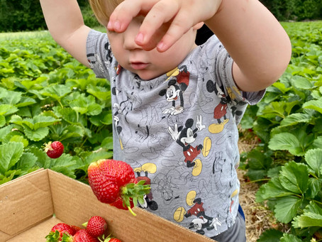 Strawberry Picking and Family Traditions