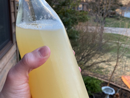 Spring Sodas: Perfect Ferment to Start the Season, a Ginger Bug!