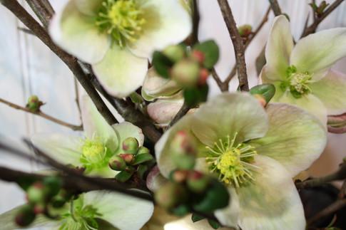 Hellebore & Flowering Quince