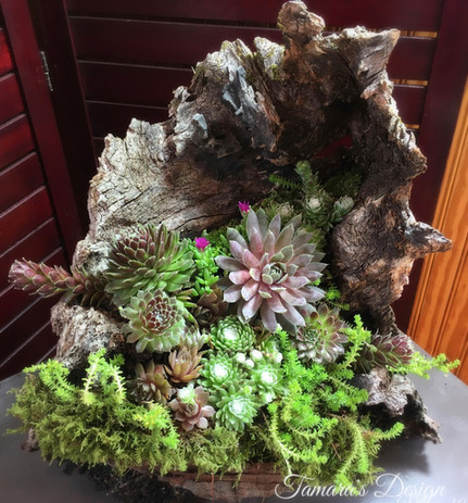 Succulents in foraged wood