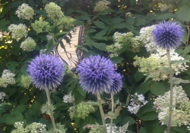 Pollinators & Posies