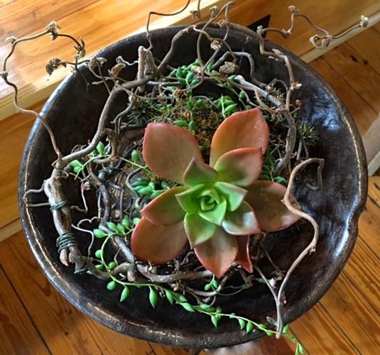 Succulent Centerpeice