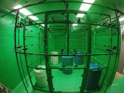 Green Big Cage 1.JPG