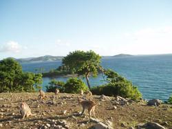 monk_island2