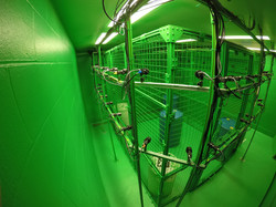 Green Big Cage 2