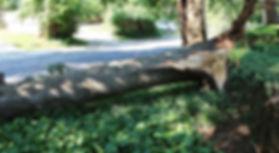 Storm-Pictures-June-2012-020.jpg