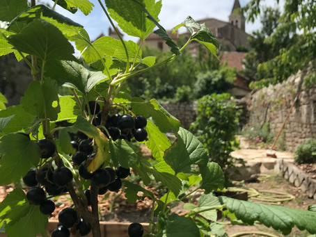 Autour du Cassis - About Black currant