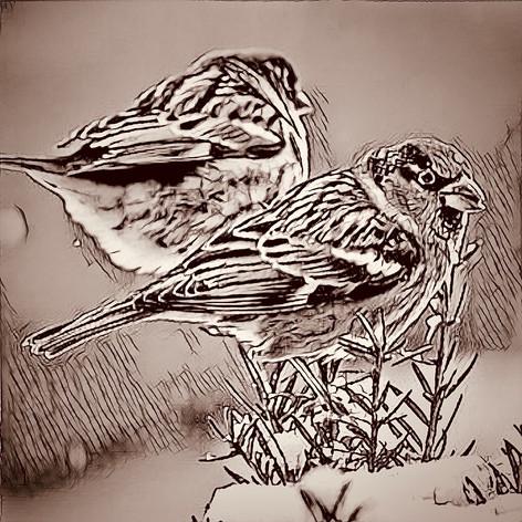 12 Song Birds.mp4